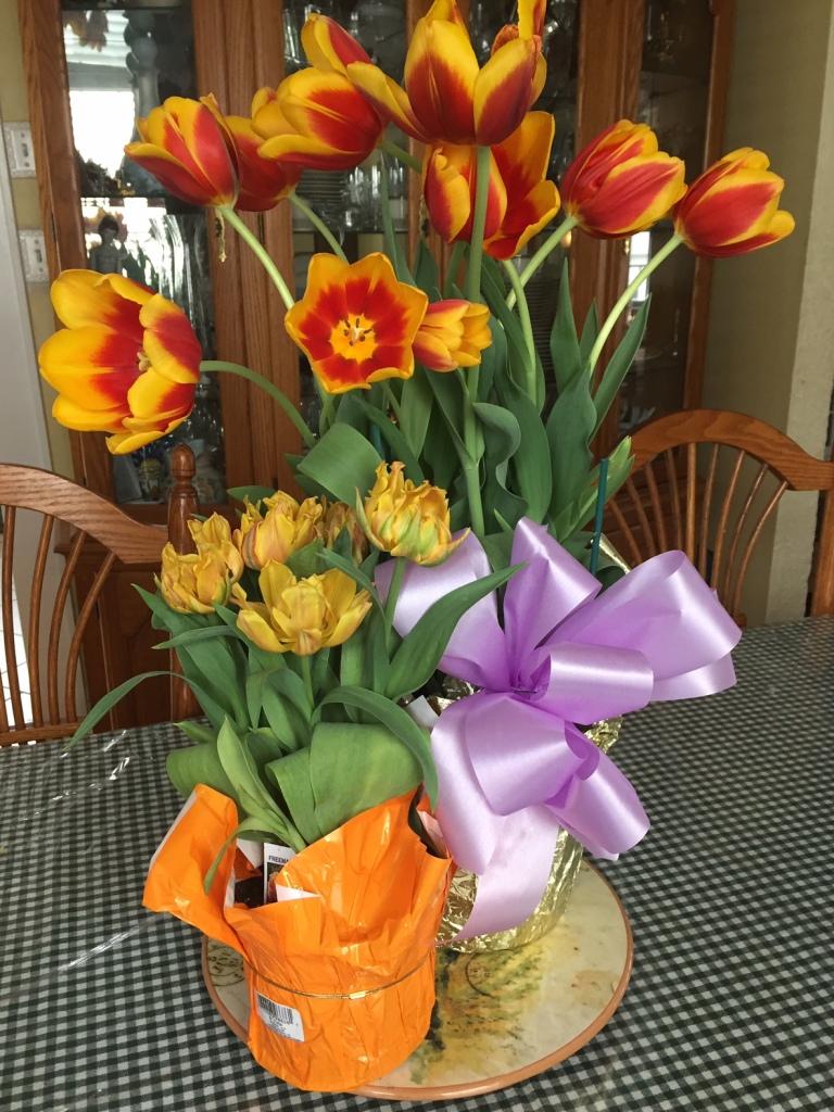 tulips--2015