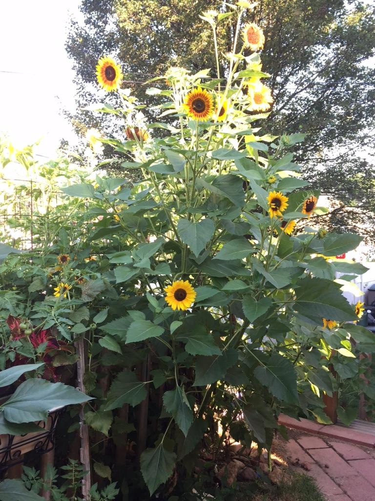 happy garden spot